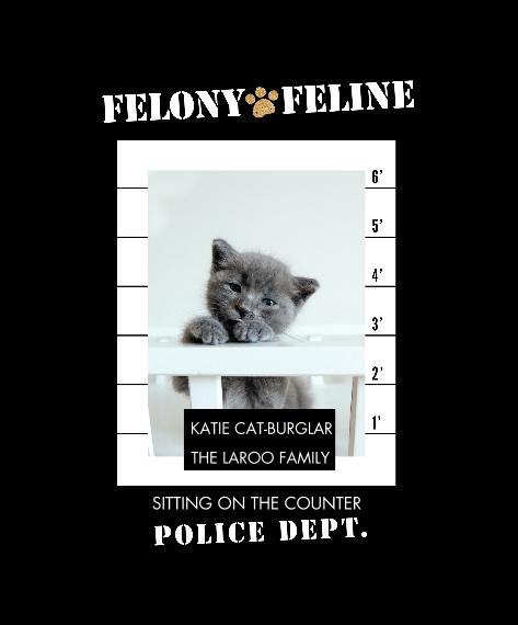 Pet Canvas Print, 20x24, Home Décor -Felony Feline