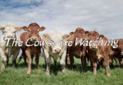 The Cows Are Watching Steam CD Key