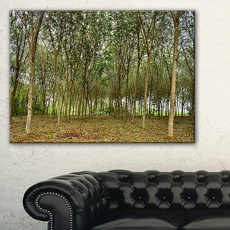 Designart Rubber Tree Plantation During Midday Canvas Art, One Size , Green