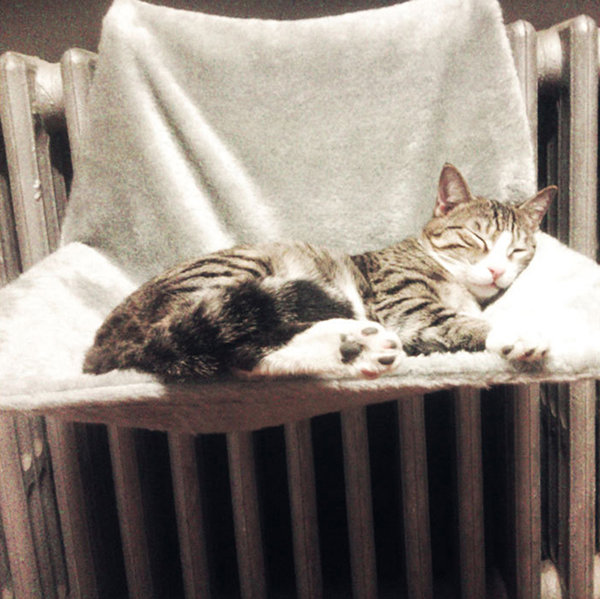 Portable Soft Fleece Warm Winter Cat Hanging Bed Pet Hammock