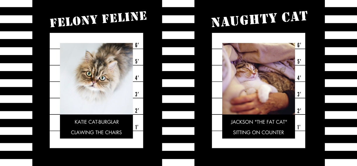 Pets 11 oz. Light Blue Accent Mug, Gift -Felony Feline