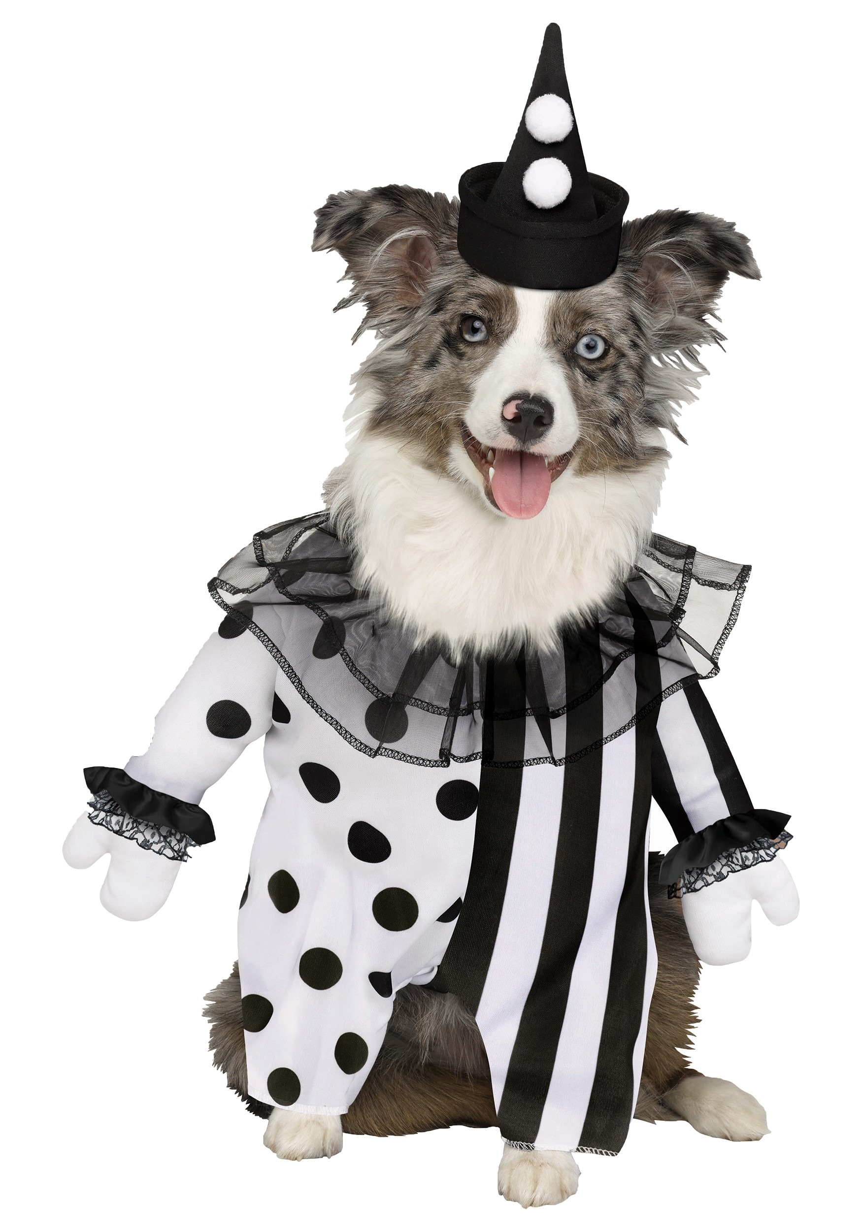 Pet Killer Clown Costume