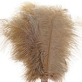 Ostrich Feathers 7-3/4 9-3/4 - Quantity: 10 - Embellishments - Approx. Length: 7-3/4 - 9-3/4 by Paper Mart