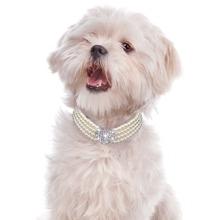 1 Stueck Hund Halskette mit Strass