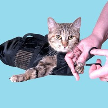1pc Cat Portable Grooming Bag