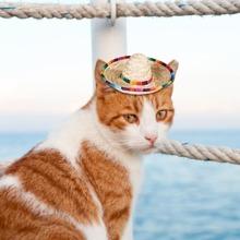 1 Stueck Katze Strohhut